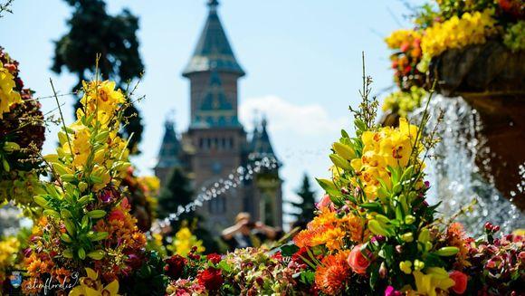Flori si culori incantatoare pe strazile Timisoarei! Festivalul feeric TimFloralis este in plina desfasurare in acest weekend, in orasul de pe Bega!