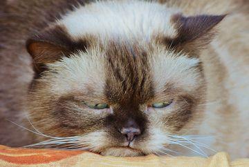 Grumpy Cat, cea mai populara pisica din lume, a murit