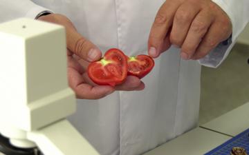 DIABET sau CANCER? Cum forţează agricultorii români coacerea legumelor de bază si ce riscuri sunt aduse sanatatii