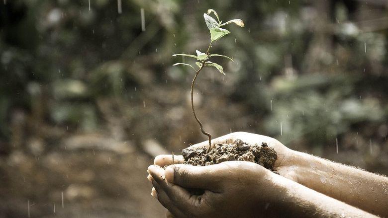 Cele mai bune ingrasaminte pentru sol