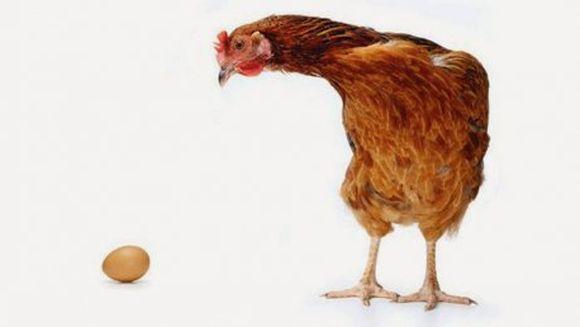 Ce a fost mai întâi, oul sau găina? S-a gasit raspunsul