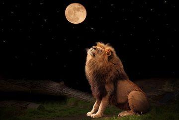 Horoscop DRAGOSTE 23 IULIE 2019. Soarele intra in Leu. Ce-ti aduce in amor?