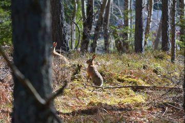 Turism de vânătoare în România – Sezonul de vânătoare 2019