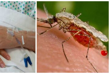 ALERTA: West Nile - O femeie a murit la Spitalul Victor Babes din Bucuresti, iar medicii suspecteaza ca pacienta ar fi contractat virusul ucigas