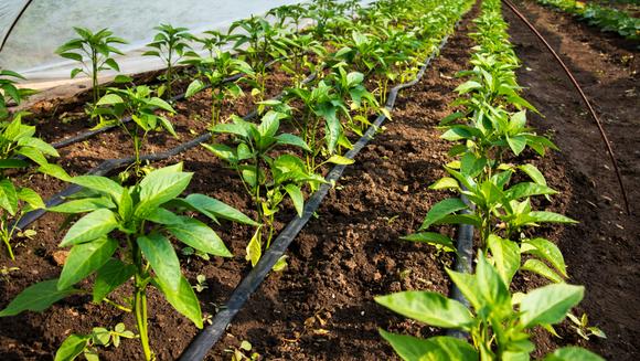 Industria agricola - dezvoltare inovativa prin produsele de protectie si sisteme optime de irigare
