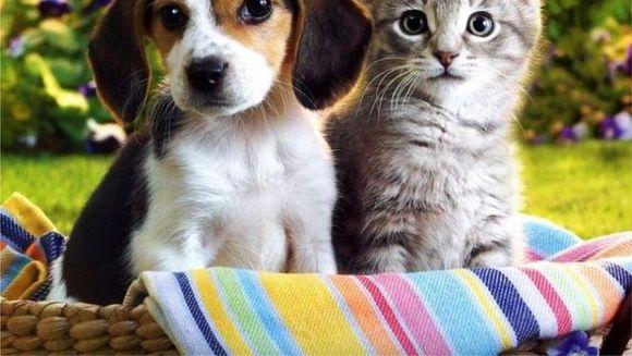 4 Octombrie, Ziua Internațională a Animalelor