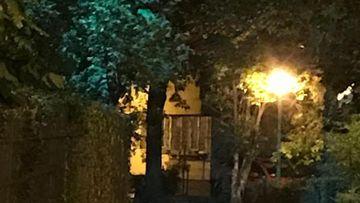 Video socant! O vulpe se plimba pe strazile din Bucuresti de o luna de zile. Ce spun oamenii care au vazut salbaticiunea