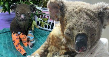Incendiile din Australia au ucis peste 1 miliard de animale. Iadul nu se mai opreste