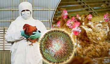 Alerta! Gripa aviara in Romania. Virusul H5N8 face ravagii in Polonia si Ungaria