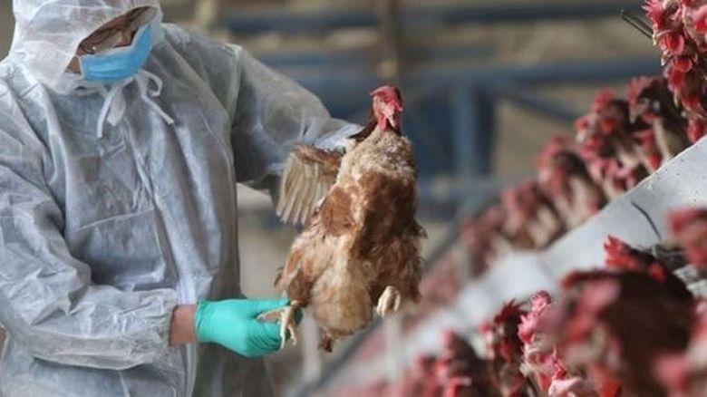 Adevărul despre gripa aviară! Acum s-a aflat: Se transmite sau nu la om?