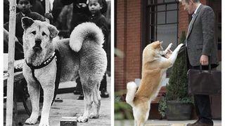 14 imagini rare cu Hachiko, cel mai devotat câine din lume