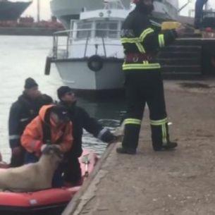Foto - Abia acum a inceput descarcarea navei cu oi care s-a scufundat in noiembrie in Portul Midia