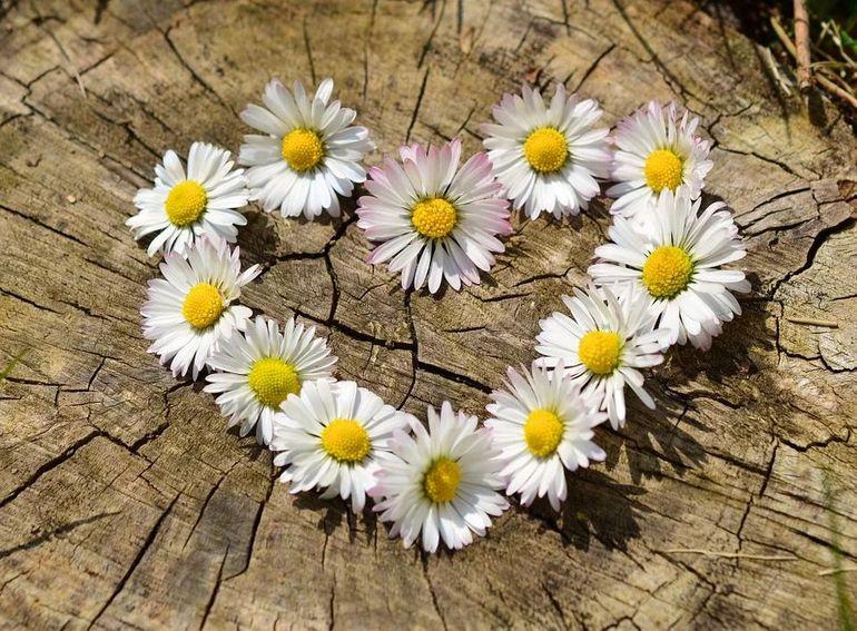 Mesaje de Florii: cele mai originale urari de Florii
