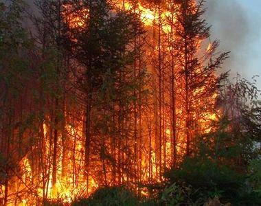 Cinci morţi şi nouă răniţi în incendii de pădure în estul Ucrainei