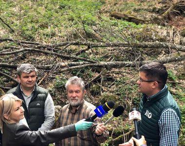 Costel Alexe, despre combaterea tăierilor ilegale din pădurile României