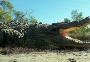 """Celebrul """"King Buka"""" a murit. Cum arăta cel mai iubit dintre crocodili, la 100 de ani"""