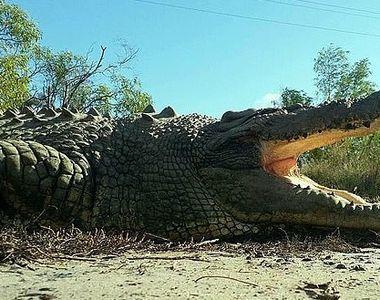 """Celebrul """"King Buka"""" a murit. Cum arăta cel mai iubit dintre crocodili, la..."""