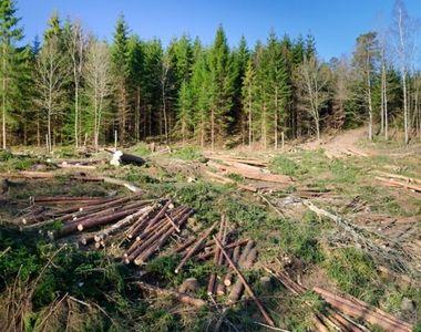 Peste 1.000 de dosare penale pentru tăieri ilegale din pădurile din România