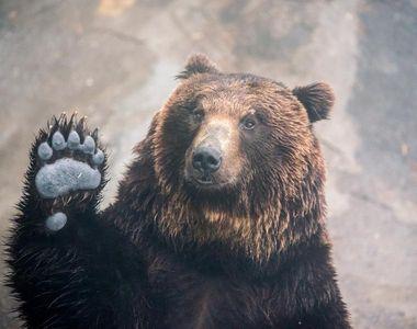 Animalul care i-a furat actele și banii unui turist din România