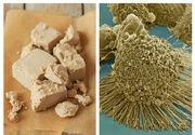 Adevărul pe care niciun medic nu îl spune: Ce se întâmplă în organismul tău dacă mânânci pâine cu dojdie?