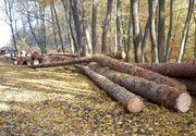 Lege împotriva Mafiei pădurilor. Au fost adoptate modificările anti-hoție la Codul Silvic