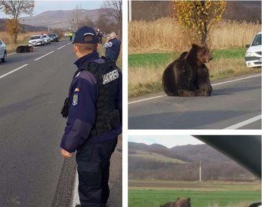 VIDEO - Caz revoltător:  18 ore de agonie pentru un urs şi niciun vinovat!
