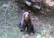 Intervenţie a jandarmilor montani în sprijinul unor turişti care s-au întâlnit cu un urs, în Bucegi