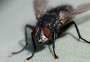 Un francez și-a aruncat casa în aer, încercând să omoare o muscă