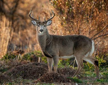 Vânător de cerbi, ucis după ce a adormit în lanul de porumb