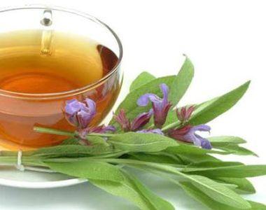 Ceaiul de salvie. Beneficiile neștiute asupra organismului