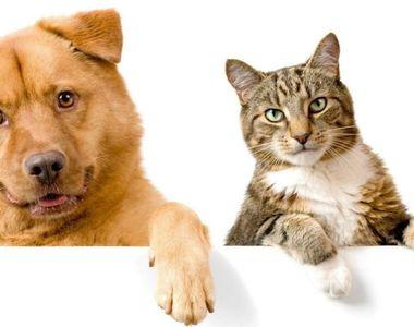COVID-19 se transmite şi la animalele de companie
