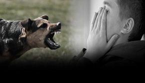VIDEO - Adolescent sfîșiat de câini. Animalele, fără stăpân