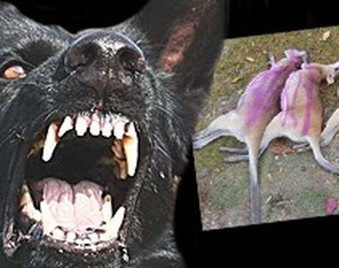 VIDEO - Carnagiu la zoo. Canguri pitici, uciși de câini