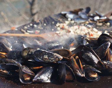 VIDEO - Midiile românești, liber la cules. Pescarii: E o veste bună!