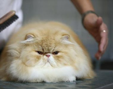Cum scapi de părul de pisică de pe haine sau de prin casă. Metoda cea mai eficientă