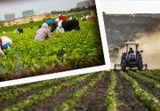 VIDEO - Sclavi la fermă: Victimele, terorizate zilnic de stăpânul lor