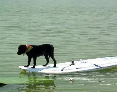 VIDEO - Labradorul Tina, senzație pe litoral. Face sporturi nautice