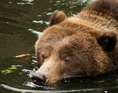 Îngrijitorul unei grădini zoologice a fost ucis în fața turiștilor de către urși