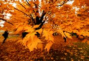 Prognoza meteo, 5 noiembrie. Vremea începe să se răcească și vor apărea ploile