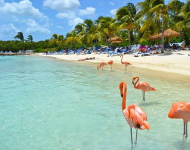 Cât ajunge să coste o vacanță pe Insula Aruba