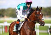 Cum arată și cât costă cel mai scump cal din lume