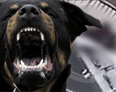 VIDEO - Imagini șocante filmate cu o femeie atacată sălbatic de câini