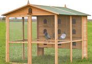 Îngrijiți porumbeii iarna cu ceva mai multă grijă - cum îi afectează frigul