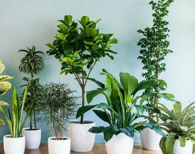 VIDEO - Bine îngrijite, plantele de apartament oferă multe satisfacții