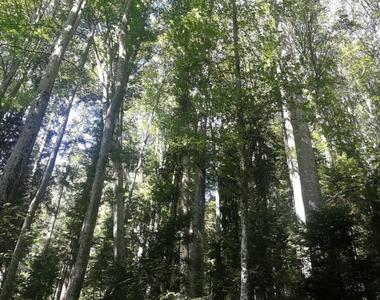 Ministerul Mediului solicită celor din domeniul silvic să se înscrie în SUMAL 2.0