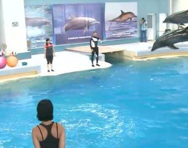 VIDEO - Delfinii Ni-Ni și Chen-Chen se pregătesc pentru sezonul estival