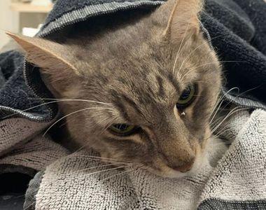 Cum a reușit pisica Arthur să salveze un copil de un șarpe veninos, cu prețul vieții