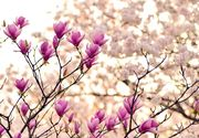 Mesaje de 1 Martie. Cele mai frumoase urări la început de primăvară