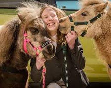 VIDEO - Bolnavii pot face online terapie cu tot felul de animale