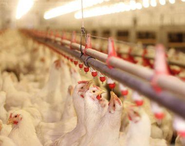 Rusia a înregistrat primele cazuri de transmitere a gripei aviare la om